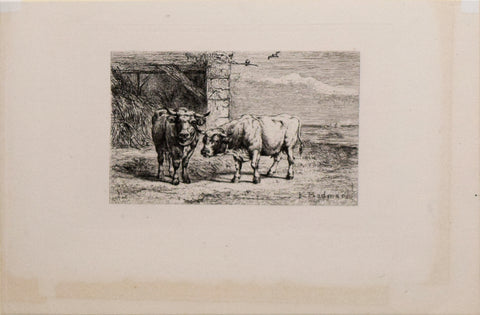 Karl Bodmer (1809-1893), Bovine (Cow Cattle)