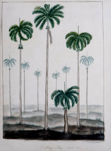 Guyanese Flora (1790-1814), Cabbage Trees