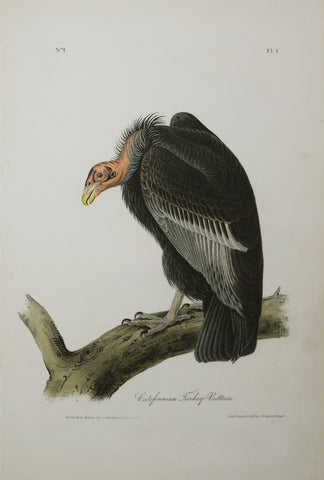 John James Audubon (American, 1785-1851), California Vulture Pl 1