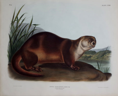 John James Audubon (1785-1851) & John Woodhouse Audubon (1812-1862), Canada Otter Male Pl. CXII