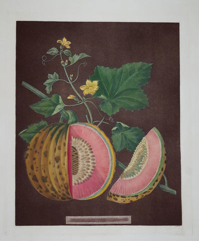 George Brookshaw (1751-1823), Cantaloupes, Pl LXX