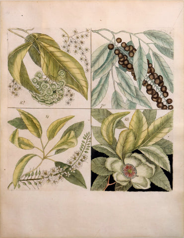 Mark Catesby (British, ca. 1679-1749), Plate 70, 81, 82, 83