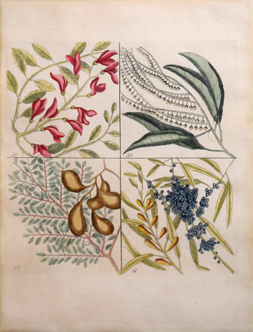 Mark Catesby (British, ca. 1679-1749), Plate 39, 40, 41, 42