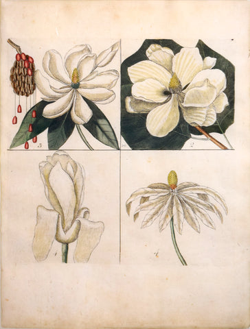 Mark Catesby (British, ca. 1679-1749), Plate 1, 2, 3, 4