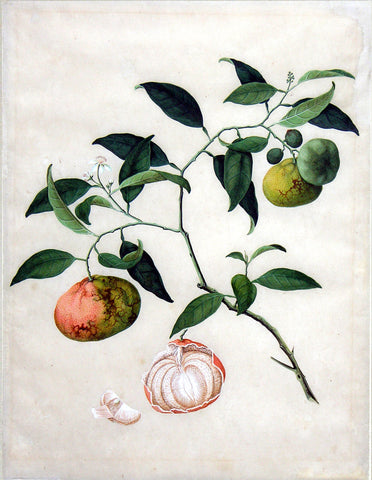 Chinese Export (late eighteenth-century), Mandarin orange