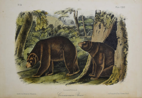 John James Audubon (1785-1851) & John Woodhouse Audubon (1812-1862),  Cinnamon Bear Pl. CXXVII