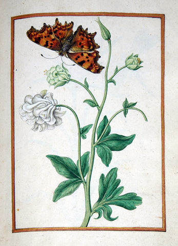 Jacques le Moyne de Morgues (French, ca. 1533-1588), Columbine with butterfly