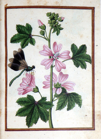 Jacques le Moyne de Morgues (French, ca. 1533-1588), Common Mallow and damselfly