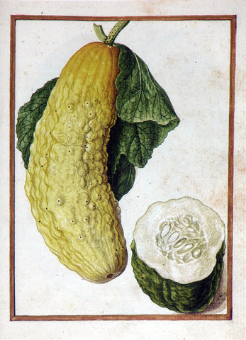 Jacques le Moyne de Morgues (French, ca. 1533-1588), Cucumber