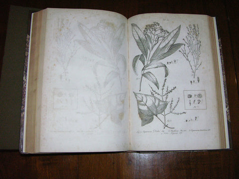 Patrick Browne (ca. 1720-1790), The Civil and Natural History of Jamaica.