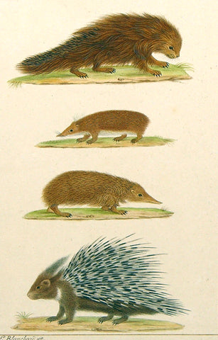 Emile Theophile Blanchard (French, 1795-1860) Porcupines