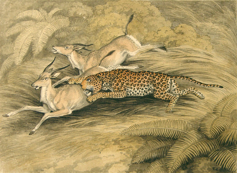 Samuel Howitt (British, 1765-1822) Panther on the Hunt