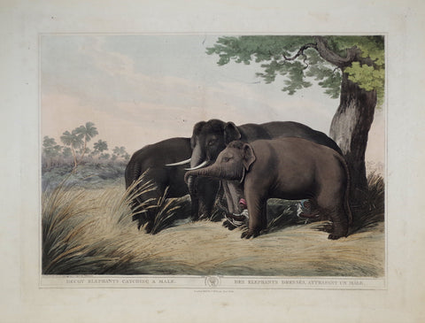 Thomas Williamson (1758-1817) and Samuel Howitt (1765-1822), Decoy Elephants Catching a Male