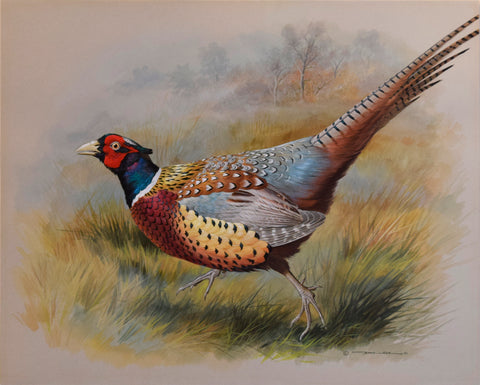 Basil Ede (1931-2016), Chinese Ring-Necked Pheasant