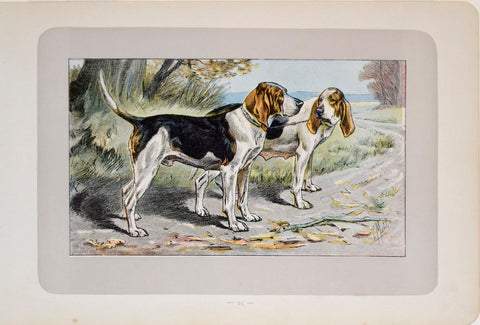 P. Mahler & J.B. Samat, English Foxhound