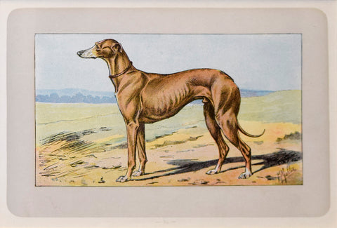 P. Mahler & J.B. Samat, English Greyhound