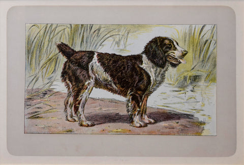 P. Mahler & J.B. Samat, English Water Spaniel