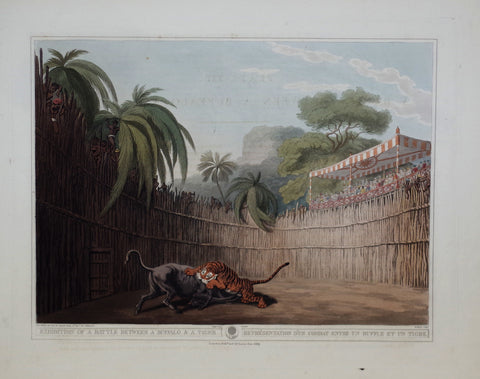 Thomas Williamson (1758-1817) and Samuel Howitt (1765-1822), Exhibition of a Battle between a Buffalo & a Tiger