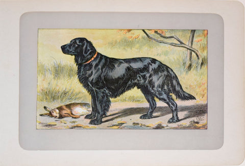 P. Mahler & J.B. Samat, Flat Coated Retriever