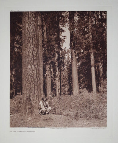 Edward S. Curtis (1868-1953), Forest Klamath Pl 448