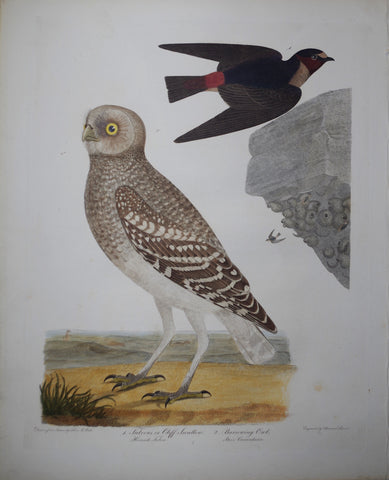 Alexander Wilson (1766-1813), Fulvous or Cliff Swallow