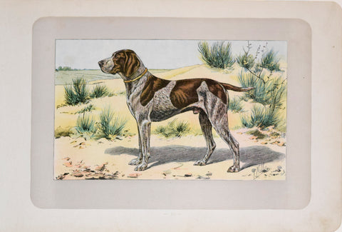 P. Mahler & J.B. Samat, German Shorthaired Pointer