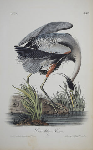 John James Audubon (American, 1785-1851), Pl 369 - Great Blue Heron