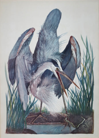 Carroll Sargent Tyson (1877-1956), Great Blue Heron