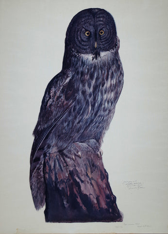 Carroll Sargent Tyson (1877-1956), Great Grey Owl