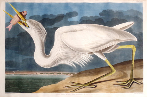 JOHN JAMES AUDUBON (1785-1851), Great White Heron, PL. CCLXXXI