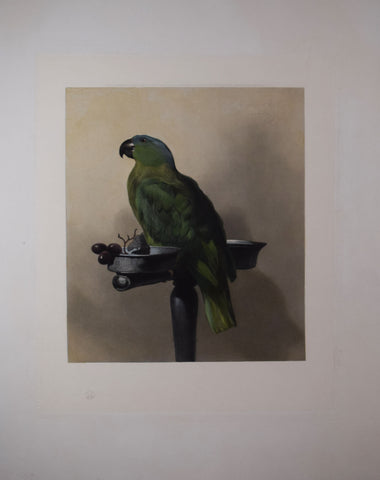 Edwin Landseer (1802-1873), after [Lory], Royal Family Parrot