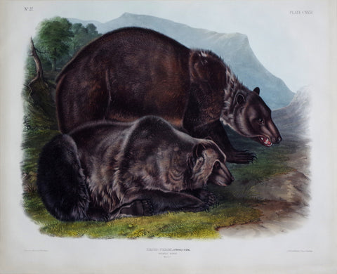 John James Audubon (1785-1851) & John Woodhouse Audubon (1812-1862), Grizzly Bear Pl. CXXI