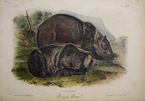 John James Audubon (1785-1851) & John Woodhouse Audubon (1812-1862), Grizzly Bear Pl. CXXXI