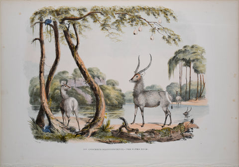 Captain W. Cornwallis Harris (1807-1848), Plate XIV The Water Buck