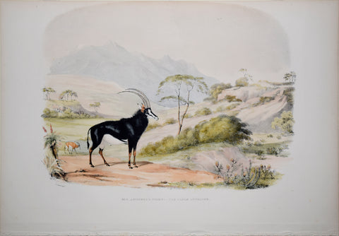 Captain W. Cornwallis Harris (1807-1848), Plate XXIII The Sable Antelope
