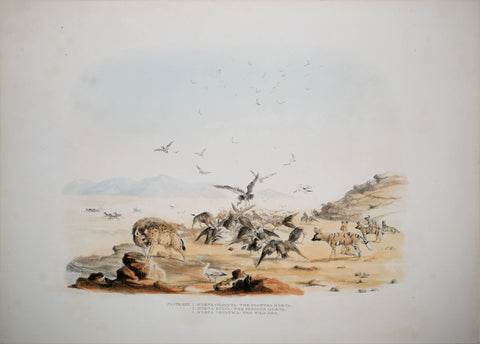 Captain W. Cornwallis Harris (1807-1848), Plate XXX The Spotted Hyaena