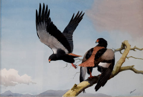 John Cyril Harrison (British, 1898-1985) , Bateleur Eagles