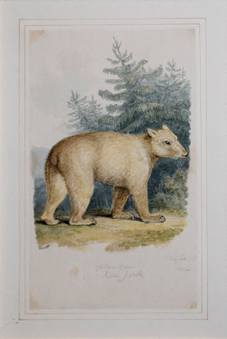 Samuel Howitt (British, 1765-1822)  Yellow bear