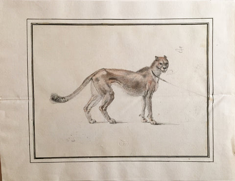 COMPANY SCHOOL (NINETEENTH-CENTURY) [Leashed Young Cougar]