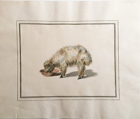 COMPANY SCHOOL (NINETEENTH-CENTURY) [Study of a Ram Drinking from a Bowl]