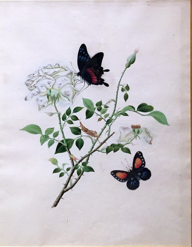 CANTONESE SCHOOL (19TH-CENTURY) [White Rose with Two Butterflies]