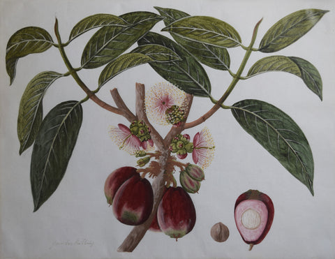 Artist Unknown (China Trade), Untitled [Red Fruit]