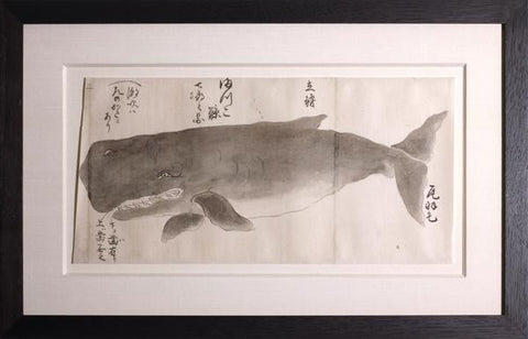 Japanese Whale Watercolor, Makkou-kujira / Sperm Whale
