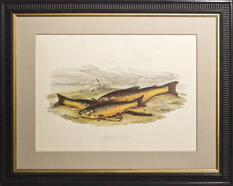 Sir William Jardine (1800-1874), Salmo fario - Lacustrine varities No 1