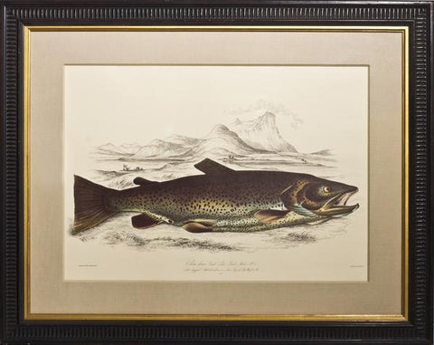 Sir William Jardine (1800-1874), Salmo ferox; Great Lake Trout
