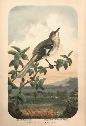 Charles Wilkins Webber,  Kentucky Mocking Bird
