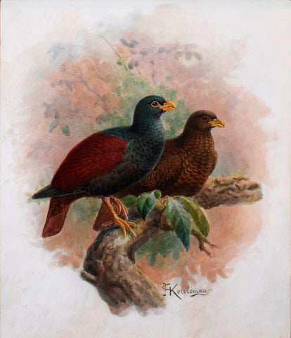 Johannes Gerardus Keulemans (Dutch, 1842-1912), Crested Partridge