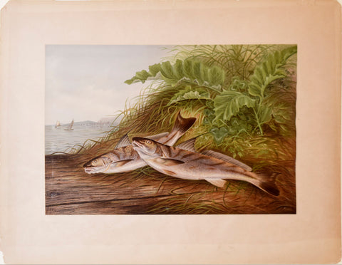 Samuel A. Kilbourne (1836-1881), The Kingfish and The Whiting