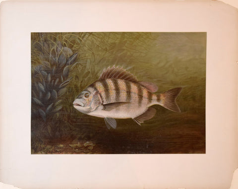 Samuel A. Kilbourne (1836-1881), The Sheepshead