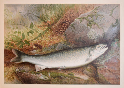 Samuel A. Kilbourne (1836-1881), Lake Trout